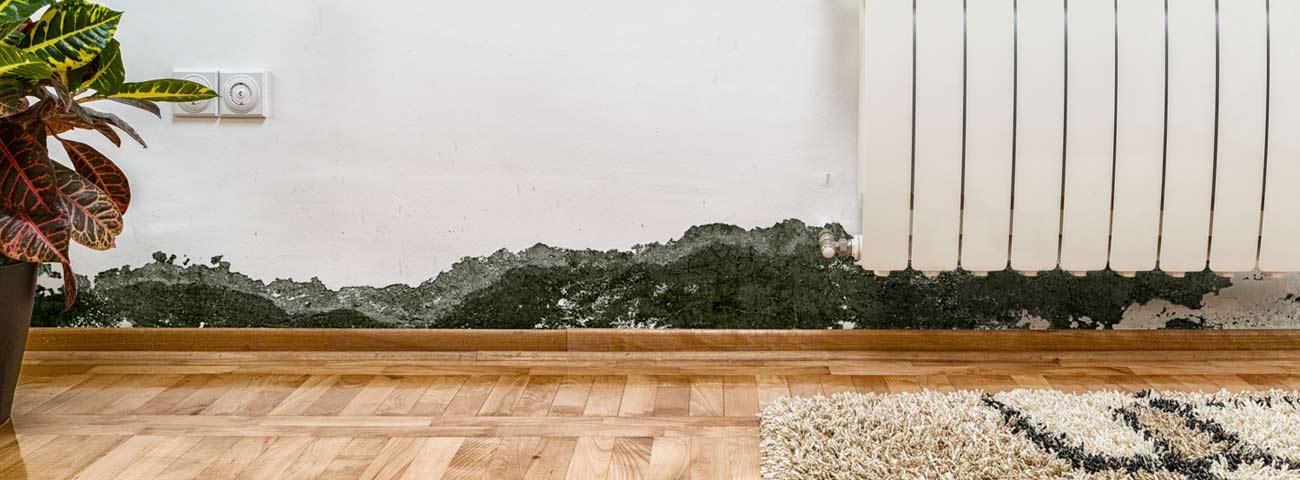 mold-damage-claims