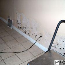 black mold damage in providence, RI