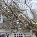 wind damage east greenwich