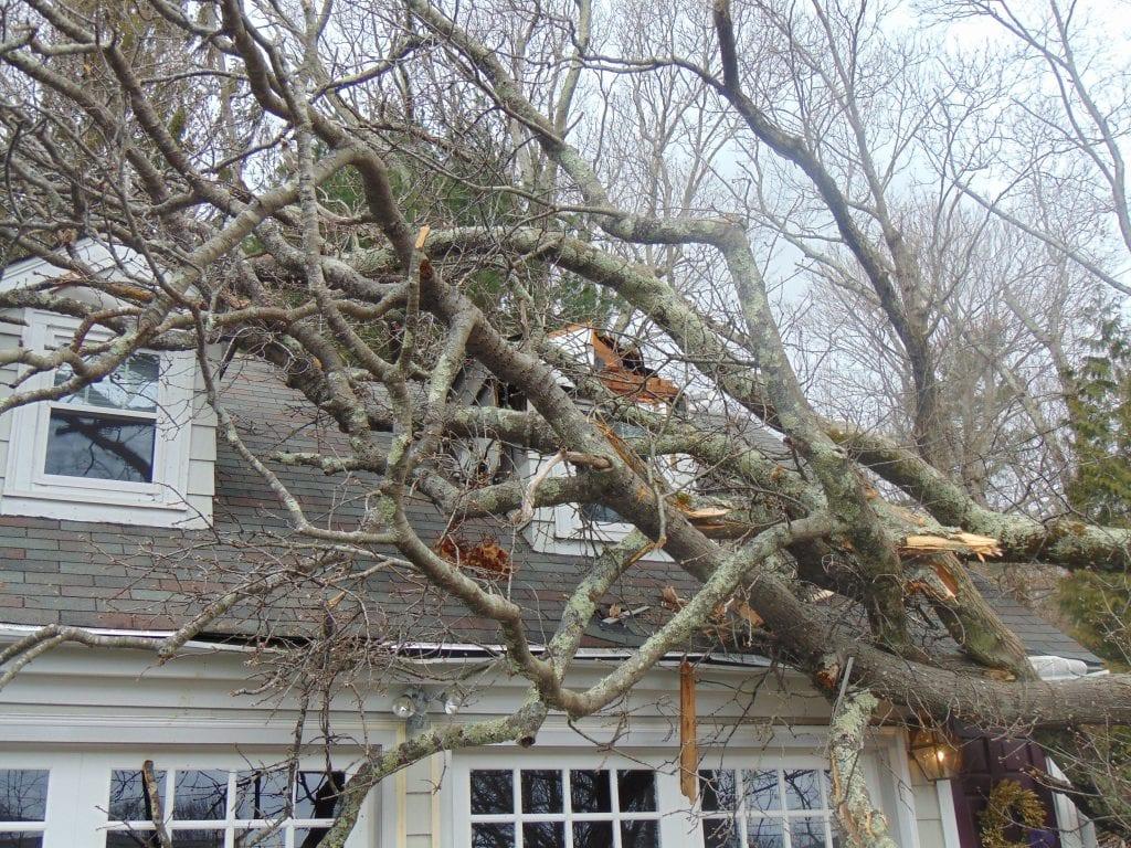storm damage in warwick