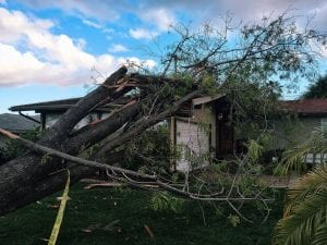 what to do if a tree falls on your house ri