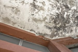 fix mold damage in ri