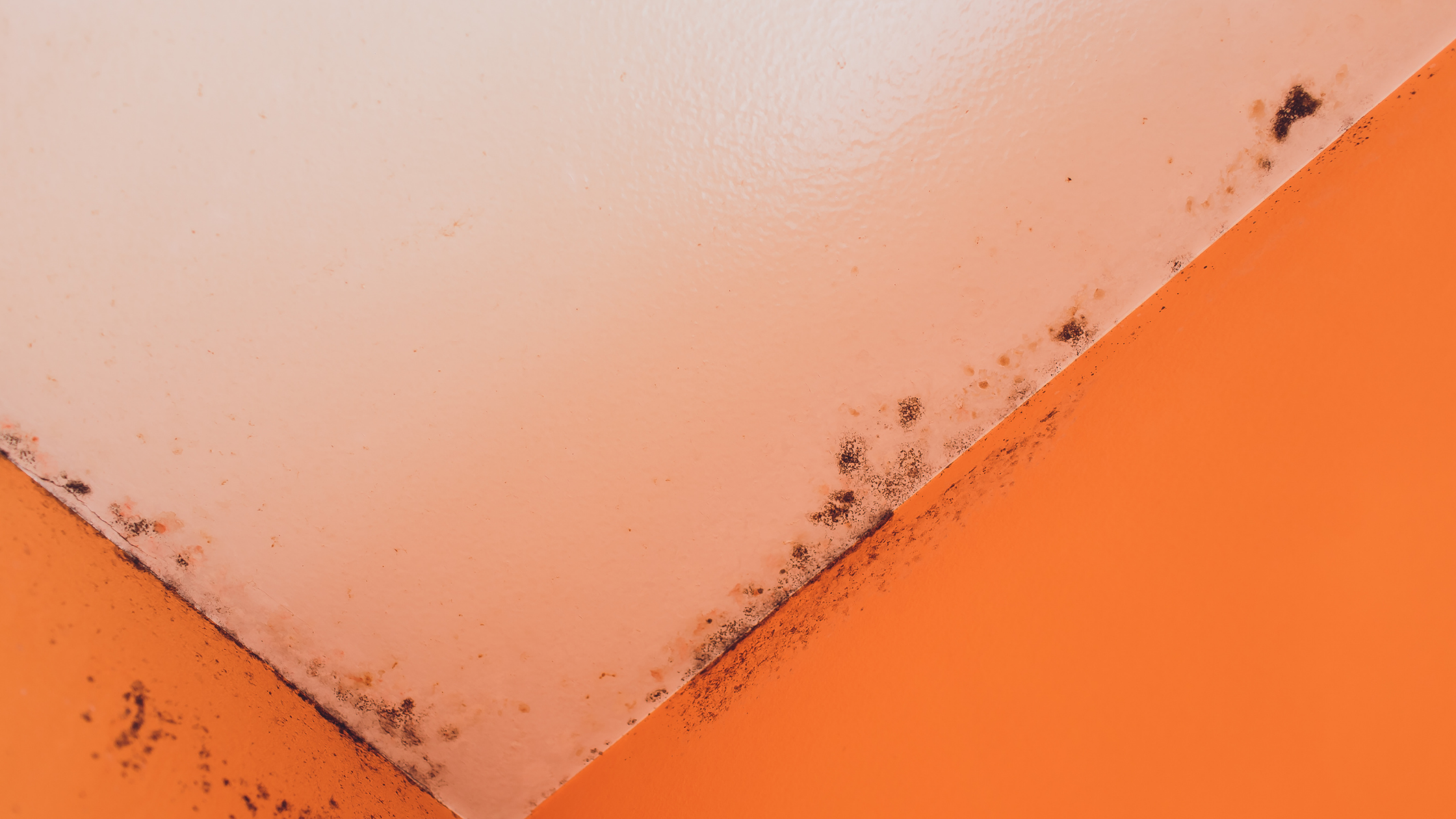 mold damage providence. Hire a public adjuster in Coventry, RI to help fix any mold damage