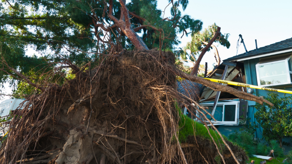 when filing a homeowners insurance claim, be sure to take picutres and document any type of loss you encounter