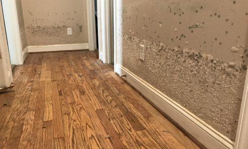 Public Adjuster In Burrillville, RI mold damage remediation