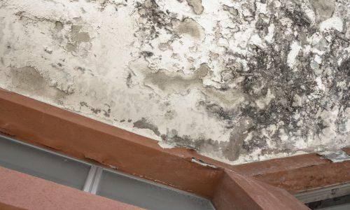 fix mold damage, public adjuster in narragansett ri