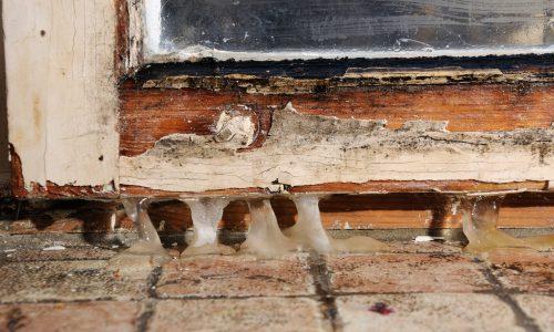 mold damage public adjuster central falls ri