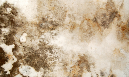 mold damage on ceiling in rhode island. Hire a public adjuster in cumberland ri today!