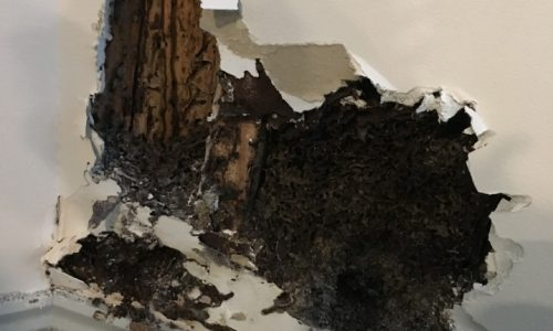 damage from termites resulting in denied property damage insurance claim. Central falls RI restoration work.