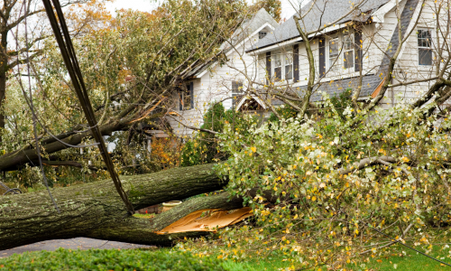 tree falling by house after storm damage. Public Adjuster in Hopkinton, RI. Public adjuster in Jamestown, RI
